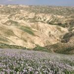 Rrugëtimi i Kreshmëve drejt Pashkëve